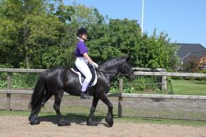 Fell Pony Gartnergaardens Melody