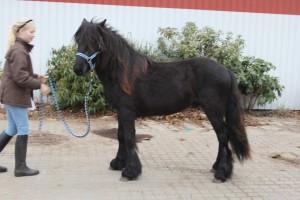 alnus 2012 092