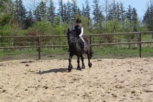 heste 025