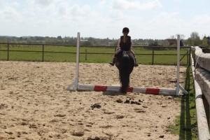 heste 028