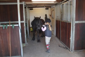 heste 029